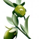 Is Jojoba Oil Good For Dry Skin?